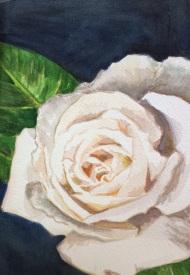 """White Rose"", watercolour on paper, 21x25cm, Charlie Kirkham 2015."
