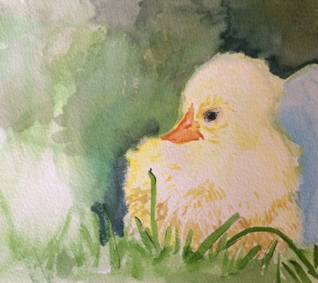 """Easter Chick study"", watercolour on paper, 7x10"", Charlie Kirkham 2015."