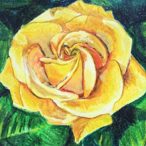 """Golden Rose"", coloured pencil and gold pen on paper, 10 x 9 cm, Charlie Kirkham 2016."